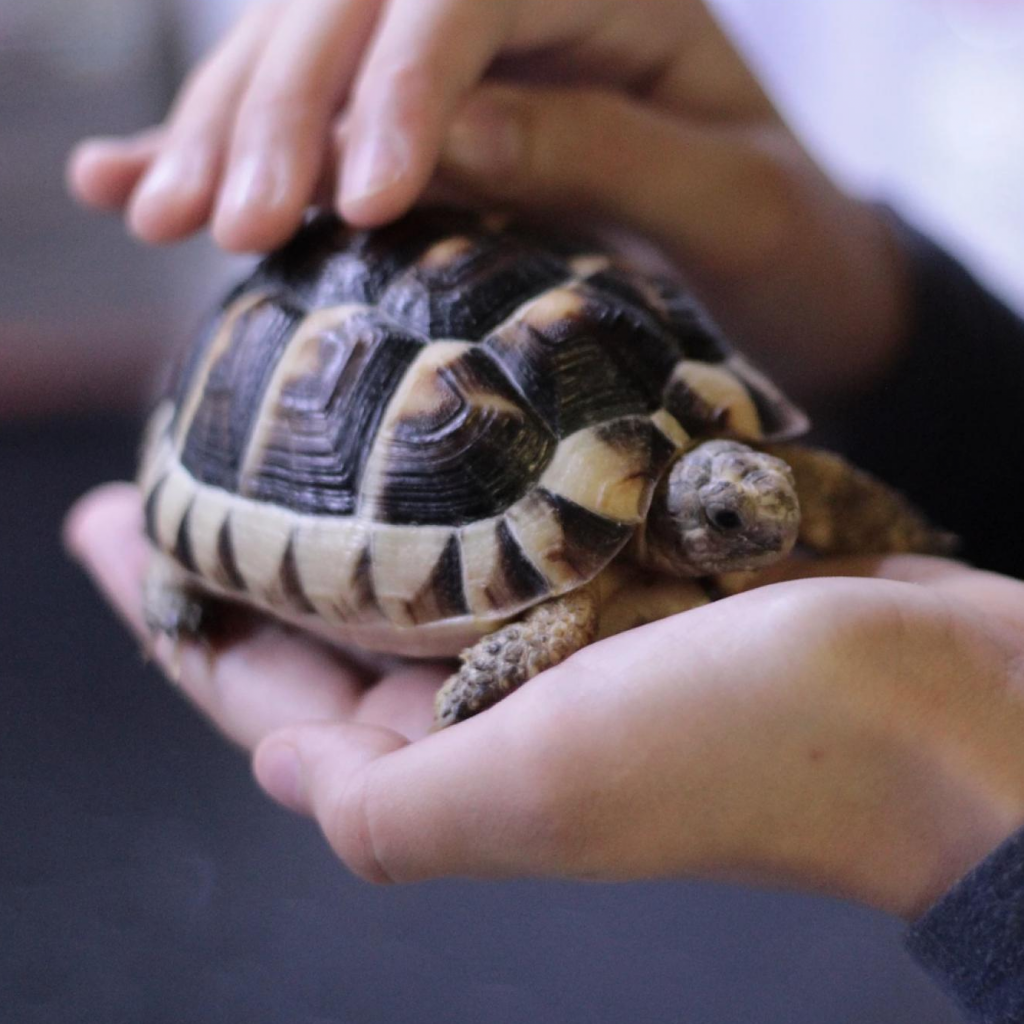 Morning Meditation with a Mindful Tortoise